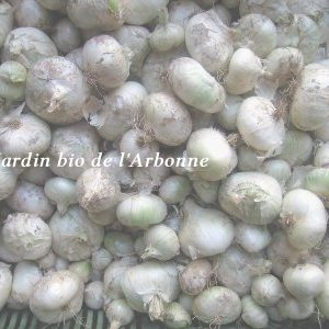 oignons blancs vrac